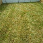 New Brighton Lawn One Week After Aeration/Power Rake