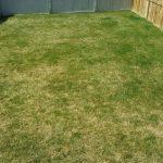 New Brighton Lawn Before Aeration/Power Rake